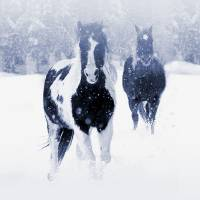 Two Horses in the Snow by I.M. Spadecaller