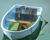 Boat With Lobster Trap