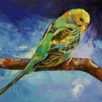 """Wild Parakeet"" by creese"