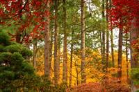 Autumn Canvas by Carol Groenen