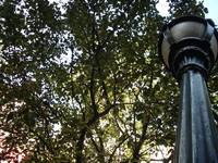 Streetlamp and Leaves