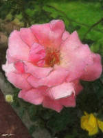 Pink Rose by the Cuautitlan Cathedral - Watercolor