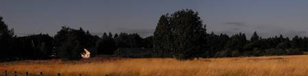 Long Dry Grass at the Fort in Vancouver Washington