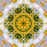 Yellow Flower Mandala Art Prints & Posters by nectaroflife