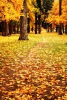 Autumn Walk in Spokane by Carol Groenen
