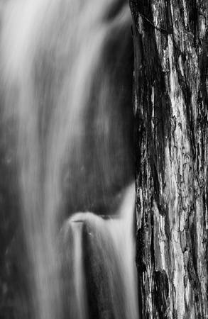 Flowing Water and Tree by Jim Crotty by Jim Crotty