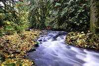 Scappoose creek. Columbia County Oregon