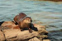 I OTTER do it again