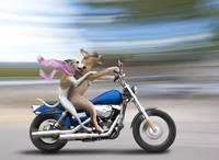 Biker Dogs Riding a Harley