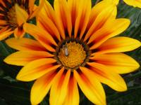 yellow and orange flower 3