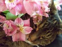 Kitty smelling flowers
