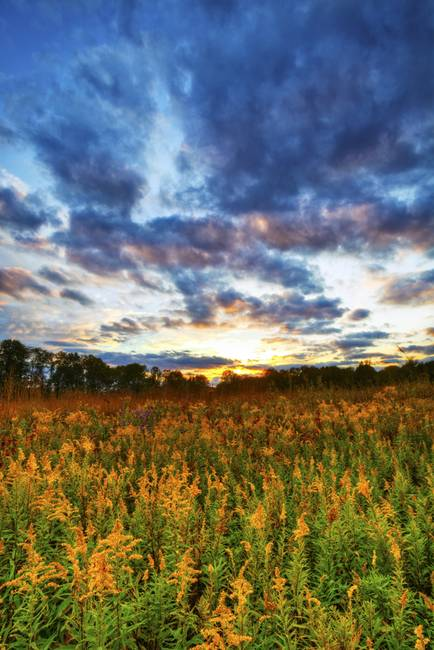 Goldenrod and October Sky by Jim Crotty by Jim Crotty