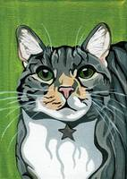 Juhl the Tabby Cat Portrait