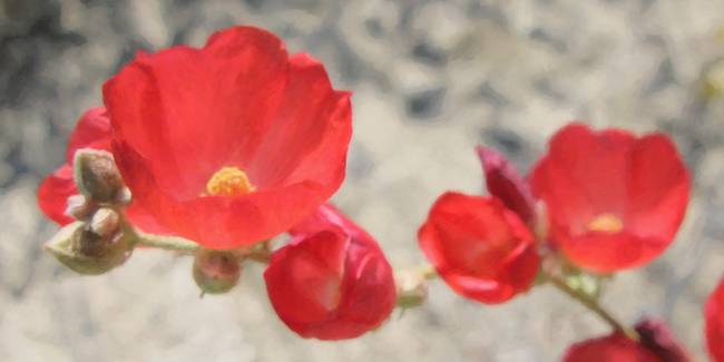 Palm Desert Flower By Mike Brown