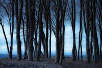 Dark Grove at Evening