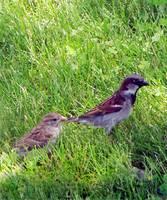 Birds in the Grass