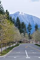 Snoqualmie Ridge Down The Road