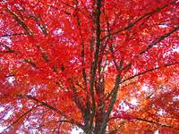 Autumn Trees art prints Fall Trees Leaves