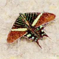 Butterfly -Coronado Art Prints & Posters by Scott K Wimer