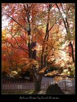 Autumn Green by Carol Groenen
