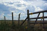 Fence Sky and Sunflowers