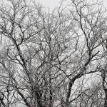 frozen beauty Prints & Posters