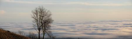 Trees Above the Clouds East