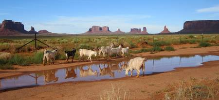 Monument Valley Goats