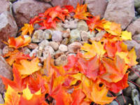 Leaves art prints Colorful Autumn Leaf Rock Garden