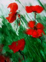 Poppies in the wind