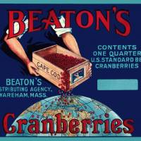 """Beatons Cranberries"" by dalidayna"