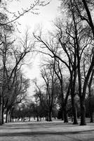 City Park (Denver, Colorado) - Black and White