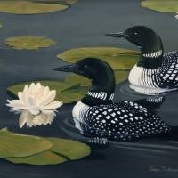 Lilly Loons by Roger Dullinger