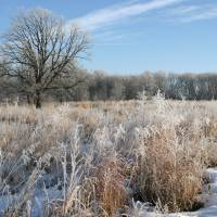 Frosted Marsh by Roger Dullinger