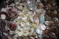 Mixed Sea Shells
