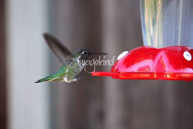 Tiny Flying Machine