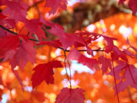 Autumn Forest Tree Leaves Red Orange