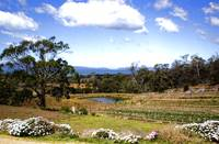 Kate's Berry Farm, Tasmania