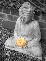 Buddah and Rose