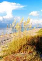 Indian Pass_St. Vincent Island Sea Oats III