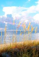 Indian Pass_St. Vincent Island Sea Oats VI