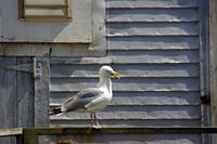 A Gull's Position