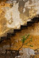 Tree And Stairs In Cappadocia