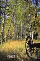 Old Wagon Wheel in Fall