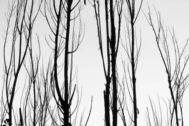 Black and white tree branches abstract by james bo insogna