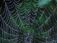 Web of Life 1