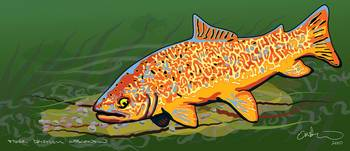 Tiger Trout, Wisconsin