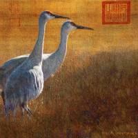 """sunset in the marsh / sandhill cranes"" by rchristophervest"