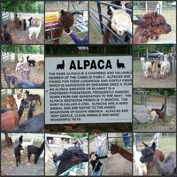 Alpaca Collage