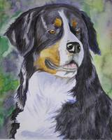 Better, Bernese Mountain Dog